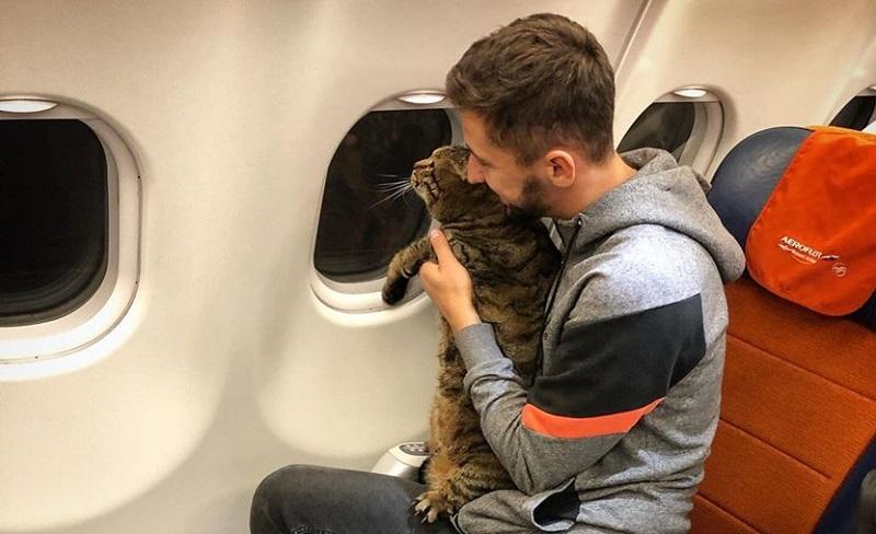 https: img-k.okeinfo.net content 2019 11 15 612 2130205 tipu-petugas-bandara-demi-terbang-bersama-kucing-kesayangan-pria-ini-dapat-sanksi-L48L3sMfm6.jpg