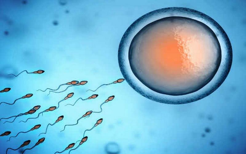 https: img-k.okeinfo.net content 2019 12 02 614 2137026 alquran-dan-sains-di-balik-proses-reproduksi-manusia-oBFmQNpWVn.jpg