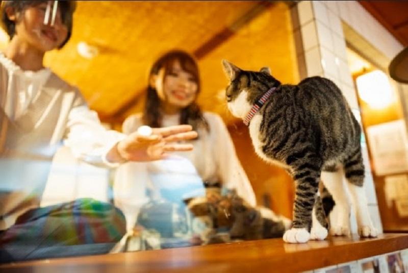 https: img-k.okeinfo.net content 2019 12 12 406 2141027 sensasi-menginap-di-hotel-kapsul-sambil-lihat-kucing-lucu-bermain-81VQOovZwR.jpg