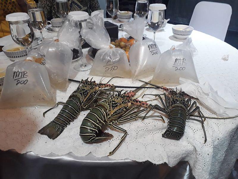 https: img-k.okeinfo.net content 2019 12 18 320 2143362 rencana-edhy-prabowo-ekspor-benih-lobster-kemendag-itu-wewenang-kkp-XxLIsUwr7x.jpg