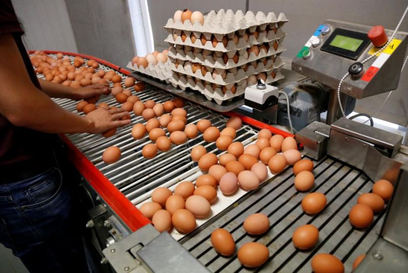 https: img-k.okeinfo.net content 2019 12 27 320 2146525 jelang-akhir-tahun-harga-ayam-hingga-daging-catatkan-kenaikan-lnQ7flaOGl.jpg