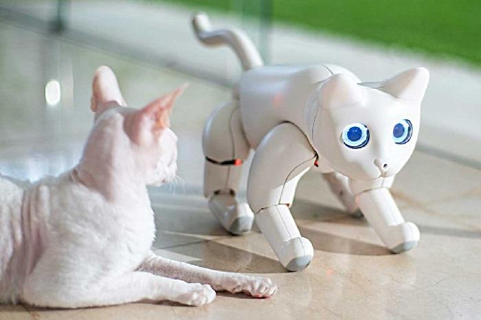 https: img-k.okeinfo.net content 2020 01 08 207 2150757 8-robot-unik-dipamerkan-di-ces-2020-LwUfGohxGy.jpg