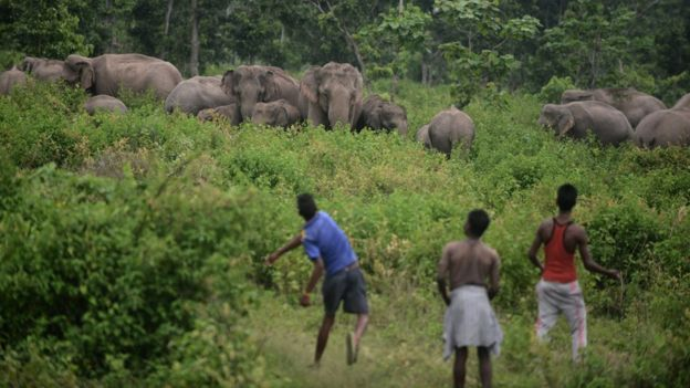 https: img-k.okeinfo.net content 2020 01 13 18 2152108 rekor-terbanyak-361-gajah-mati-di-sri-lanka-selama-2019-k8Ih3tAadD.jpg