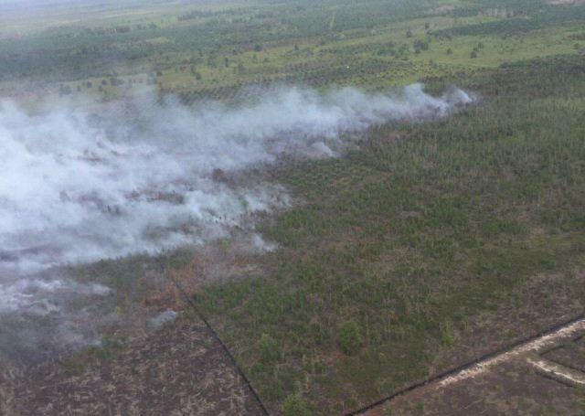 https: img-k.okeinfo.net content 2020 01 16 340 2153932 satgas-karhutla-berjibaku-padamkan-kebakaran-hutan-konservasi-di-riau-0vB9c5niXP.jpg
