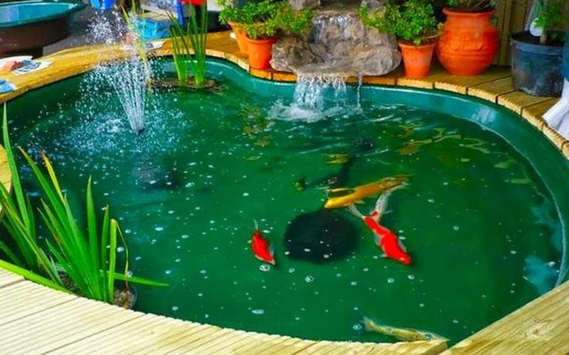 https: img-k.okeinfo.net content 2020 01 25 612 2158171 ini-5-hal-yang-perlu-diketahui-ketika-hendak-membuat-kolam-ikan-di-rumah-FvkEjf9pzC.jpg