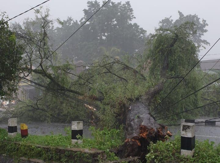 https: img-k.okeinfo.net content 2020 02 14 510 2168636 hujan-deras-guyur-yogyakarta-puluhan-pohon-tumbang-zgfBwV3YZg.jpg
