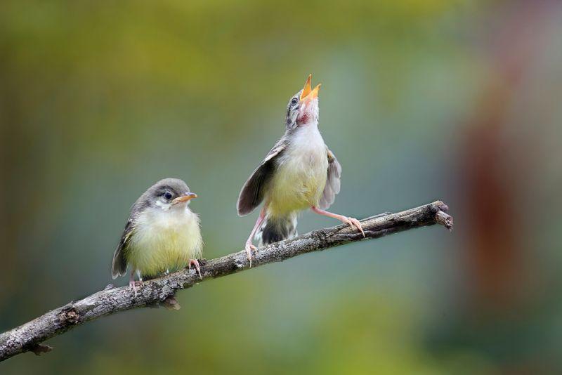 https: img-k.okeinfo.net content 2020 02 14 612 2168762 indonesia-punya-21-spesies-burung-baru-loh-it7Th1zNqR.jpg