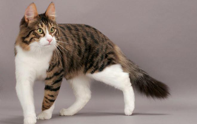 https: img-k.okeinfo.net content 2020 02 20 338 2171190 pembunuh-kucing-di-bekasi-hanya-dikenakan-wajib-lapor-Co2SNPWaDO.JPG