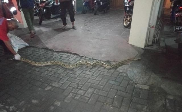 https: img-k.okeinfo.net content 2020 02 20 512 2171345 warga-solo-digegerkan-kemunculan-ular-sanca-sepanjang-3-meter-JNmsUZb0HH.jpg