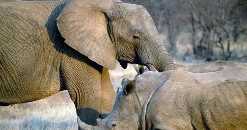 https: img-k.okeinfo.net content 2020 02 20 56 2171732 terancam-punah-gajah-dan-badak-miliki-peran-penting-untuk-ekosistem-bumi-9y0FHG799d.jpg