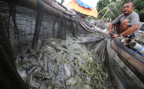 Ingin Bisnis Budidaya Ikan Lele Cek Dulu Lokasinya Okezone Economy