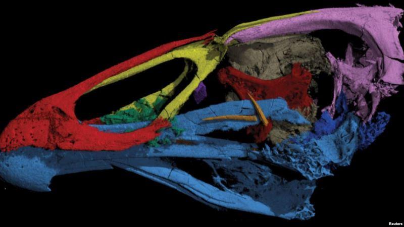 https: img-k.okeinfo.net content 2020 03 19 56 2186074 ilmuwan-meneliti-fosil-wonder-chicken-berusia-66-juta-tahun-zNiwkeDMFj.jpg