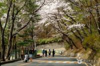 OKEZONE WEEK-END: Mantap! Wisata ke 3 Tempat di Korea Ini Tak Perlu Keluar Uang