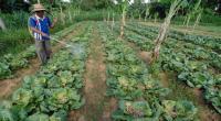 Sumut Siapkan Lahan 160 Ha untuk Program 1.000 Desa Organik