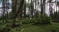 Gawat! Kondisi Hutan di Kabupaten Malang dalam Keadaan Darurat