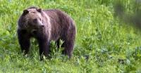 6 Hewan Tertinggi di Dunia, Beruang Grizzly Salah Satunya!