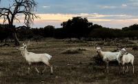 Kontroversial! Kebun Binatang Ini Bebaskan Pengunjung Berburu, Kepala Hewan Dihargai Ratusan Juta Rupiah