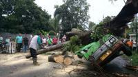 Kasihan, Lagi <i>Ngetem</i> Tunggu Penumpang Angkot Ini Malah Ketimpa Pohon Roboh di Bogor