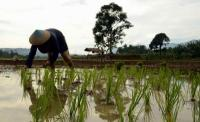 Lahan Pertanian Organik Bisa Wujudkan Swasembada Pangan