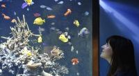 Indonesia Berpotensi Rajai Pasar Ikan Hias Dunia