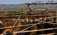 Cek Ketersedian Daging Sapi, KPPU Sidak RPH Karawaci, Tangerang dan Semanan