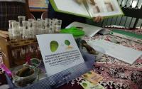 Pelajar Tangerang Ubah Cangkang Kerang Hijau Jadi Penetralisir Limbah Laut