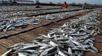 BUSINESS HITS:Industri Perikanan RI Tak Kalah Saing dengan Malaysia atau China