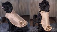 Dijual Rp1,9 Miliar, Ini Penampilan Jaket Khusus Anjing Termahal di Dunia