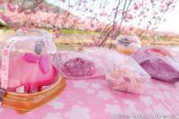 Unik! Jepang Luncurkan 8 Jenis Camilan Lezat Terinspirasi dari Bunga Sakura