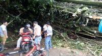 Jalan Trans Sulawesi-Majene Tertimbun Longsor, Arus Lalu Lintas Lumpuh