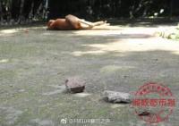 Kanguru di Bonbin China Mati Dilempari Batu oleh Pengunjung