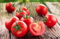 Tomat Punya Banyak Manfaat, Termasuk Melawan Kanker