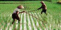 85% Anggaran Kementan Dialokasikan untuk Petani