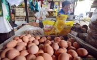 Harga Telur Ayam Meroket, Ini Fakta Menariknya