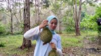 Durian Taibabi, Durian Super Mahal dari Bukit Teringgiling Bangka Belitung