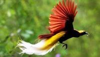Duh, Cantiknya Burung-Burung Khas Indonesia