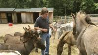 Mengenal Terapi Menggunakan Keledai untuk Lepas Stres di New York
