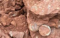15 Fosil Telur Dinosaurus Ditemukan di China