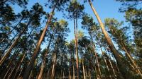 Sita Alat Berat dari Lokasi Perambahan Hutan, Tim Kementerian LHK Diadang Ormas Kepemudaan
