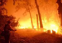 42 Orang Tewas dalam Kebakaran Hutan Terburuk dalam Sejarah California
