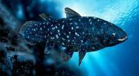 Anggota Marinir Temukan Ikan Purba di Perairan Raja Ampat
