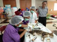 Berantas Rabies, 132 Kucing Jantan di Jaktim Dikebiri