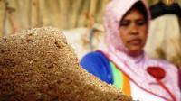 Ada di Bandung, Jamur Kini Bisa Disulap Jadi Bahan Bangunan