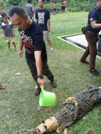 Kuansing Riau Banjir, Buaya Masuk ke Permukiman
