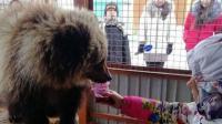 Kisah Mashka, si Beruang Kesepian yang 'Ditolak' di Kampungnya