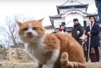 Seekor Kucing Diangkat Menjadi