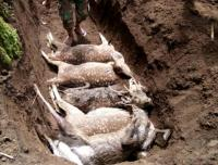 Belasan Rusa di Coban Jahe Malang Mati Misterius dengan Gigitan di Leher