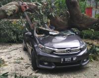 Angin Kencang Landa Semarang, Pohon Tumbang Timpa Mobil hingga Ringsek