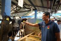 Sandiaga Uno Janjikan Program OK OCE untuk Peternak di Jatim