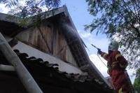 Kawanan Tawon Serang 4 Warga Magetan hingga Terluka